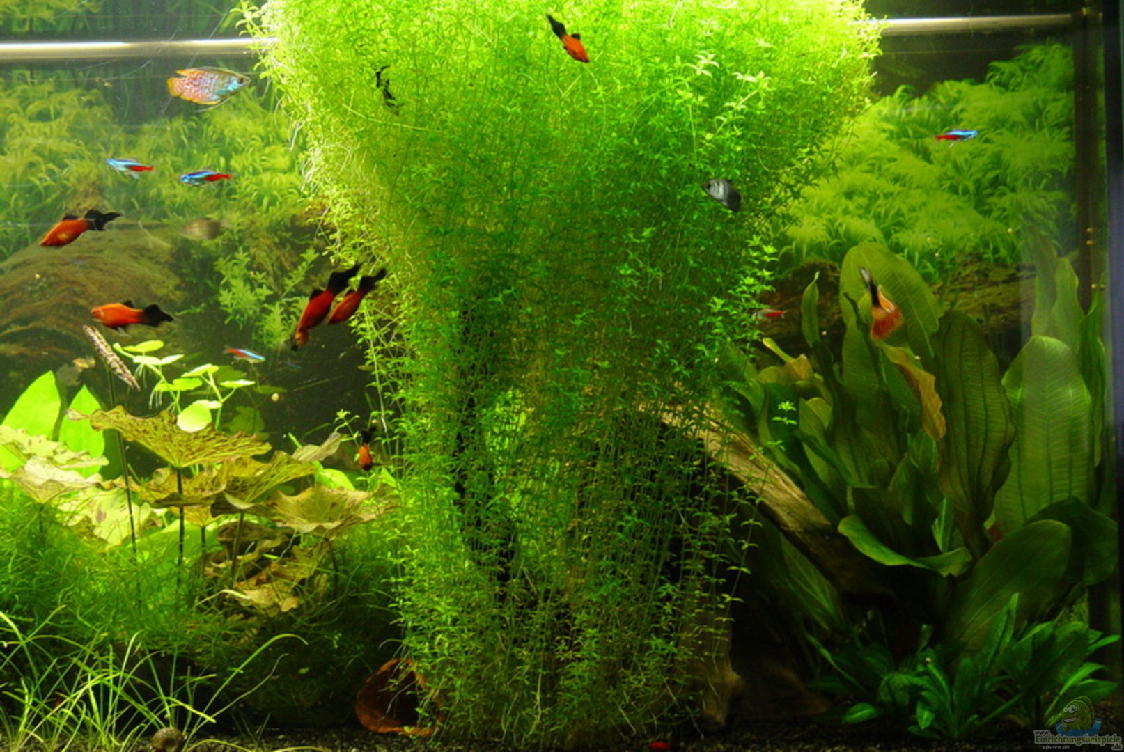 Aquarium von kleintommy becken 11621 for Dekoration 1 mai