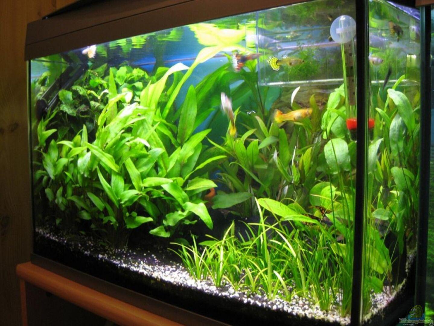 aquarium von absolutvanilia becken 60l. Black Bedroom Furniture Sets. Home Design Ideas