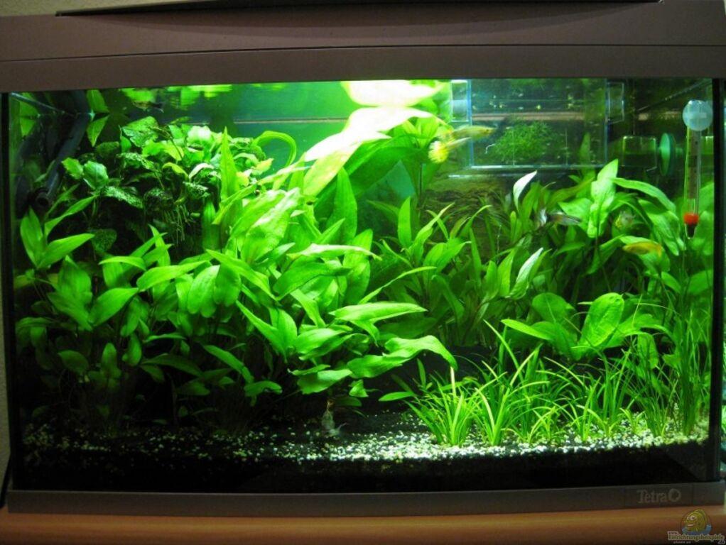 Aquarium von AbsolutVanilia  Becken 60L