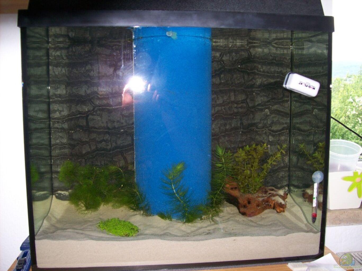 aquarium von auecheck becken 11888. Black Bedroom Furniture Sets. Home Design Ideas