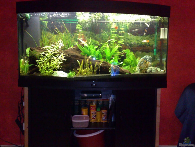 Aquarium von welslau 12227 wohnzimmer - Aquarium wohnzimmer ...