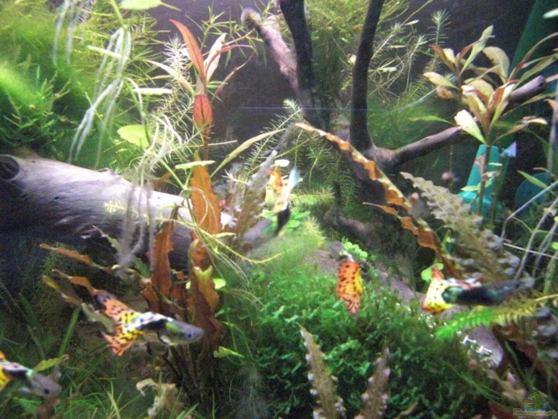 Aquarium von max94 becken 12261 for Kampffisch becken
