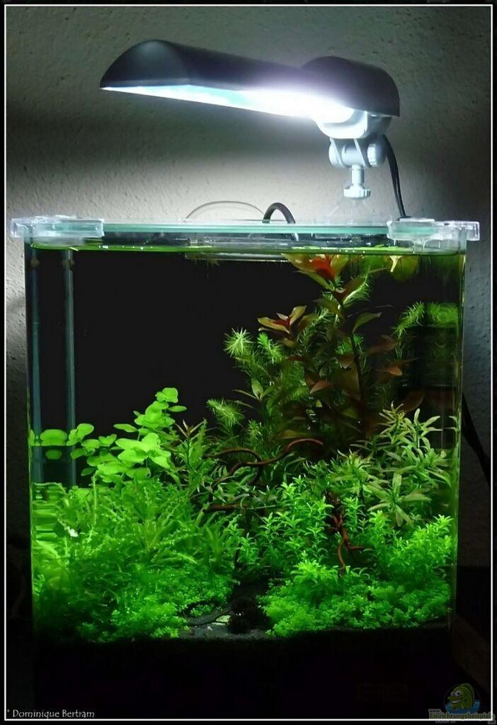 aquarium von dominique mein kleines. Black Bedroom Furniture Sets. Home Design Ideas