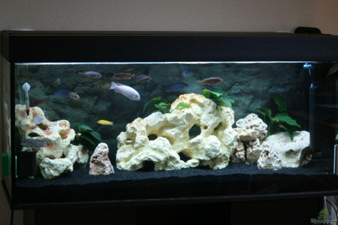 aquarium von firetux becken 12270. Black Bedroom Furniture Sets. Home Design Ideas