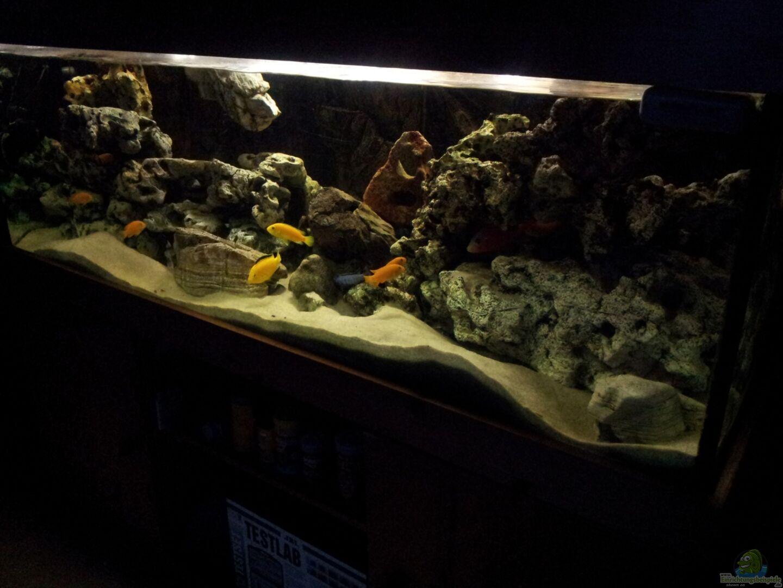 Aquarium mein malawi aus mein malawi von erwin12 for Mein aquarium