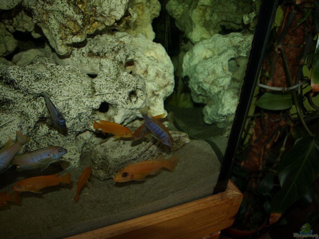 Epoxidharz aquarium r ckwand zuhause image idee - Aquarium ruckwand selber bauen anleitung ...
