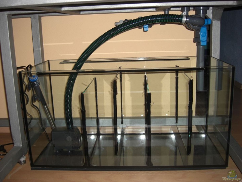 fertig verrohrtes filterbecken mit eheim pumpe und j ger. Black Bedroom Furniture Sets. Home Design Ideas