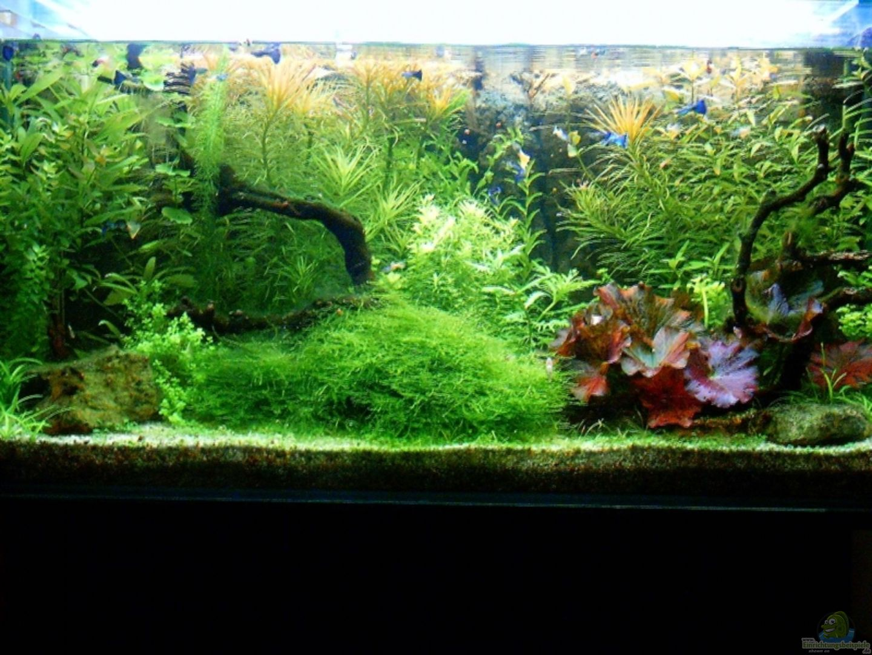 aquarium von zaffa becken 12411. Black Bedroom Furniture Sets. Home Design Ideas