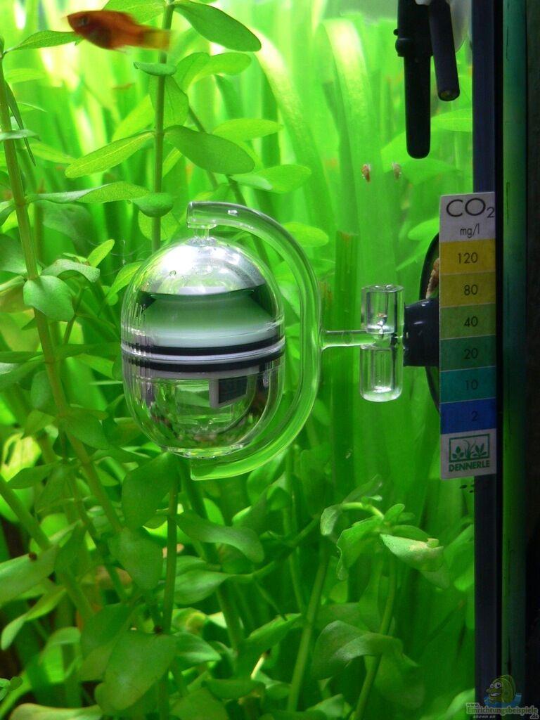aquarium von lars t lars becken. Black Bedroom Furniture Sets. Home Design Ideas