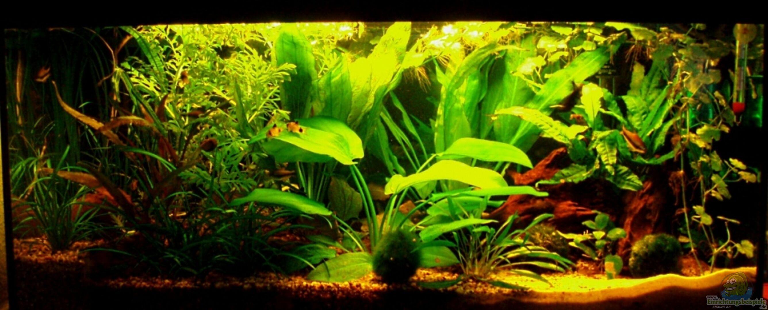 aquarium von marco 12557 kaiser becken. Black Bedroom Furniture Sets. Home Design Ideas