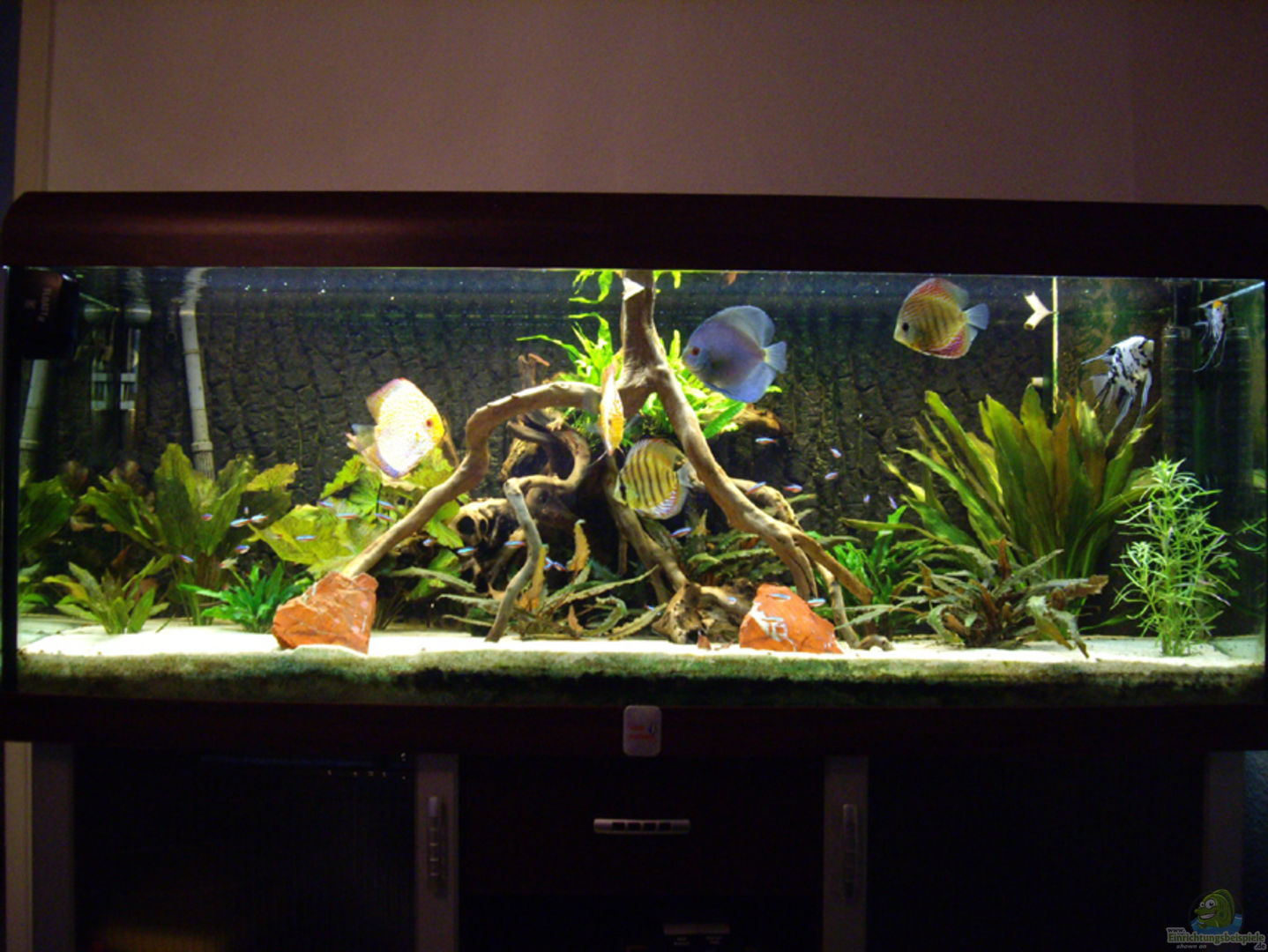 aquarium von franky lunatic becken 12579. Black Bedroom Furniture Sets. Home Design Ideas