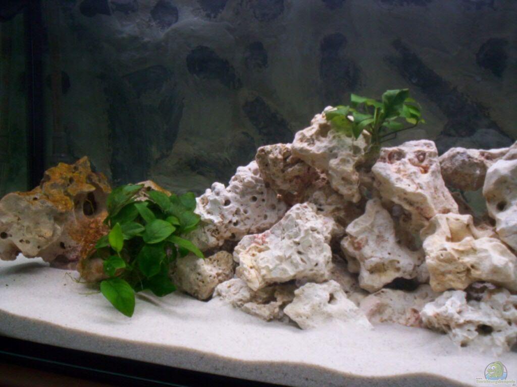 aquarium von daniel hermans becken 12587. Black Bedroom Furniture Sets. Home Design Ideas