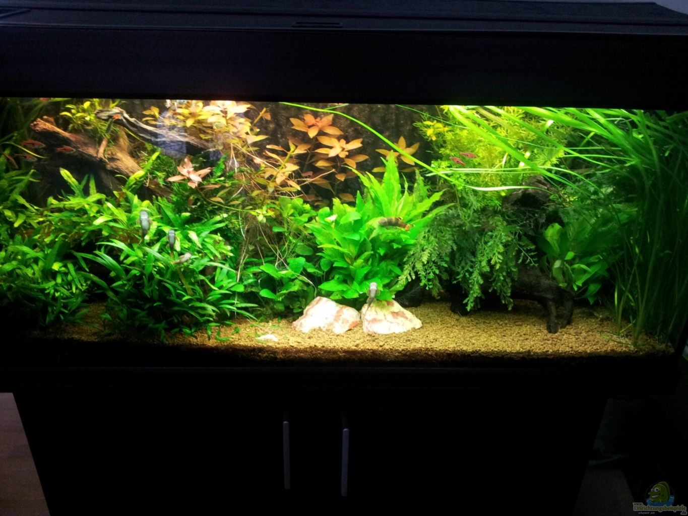Example No 12753 From The Category Community Tanks Thermometer Original For Aquascape Aquarium Hauptansicht Von Unterwasserdschungel