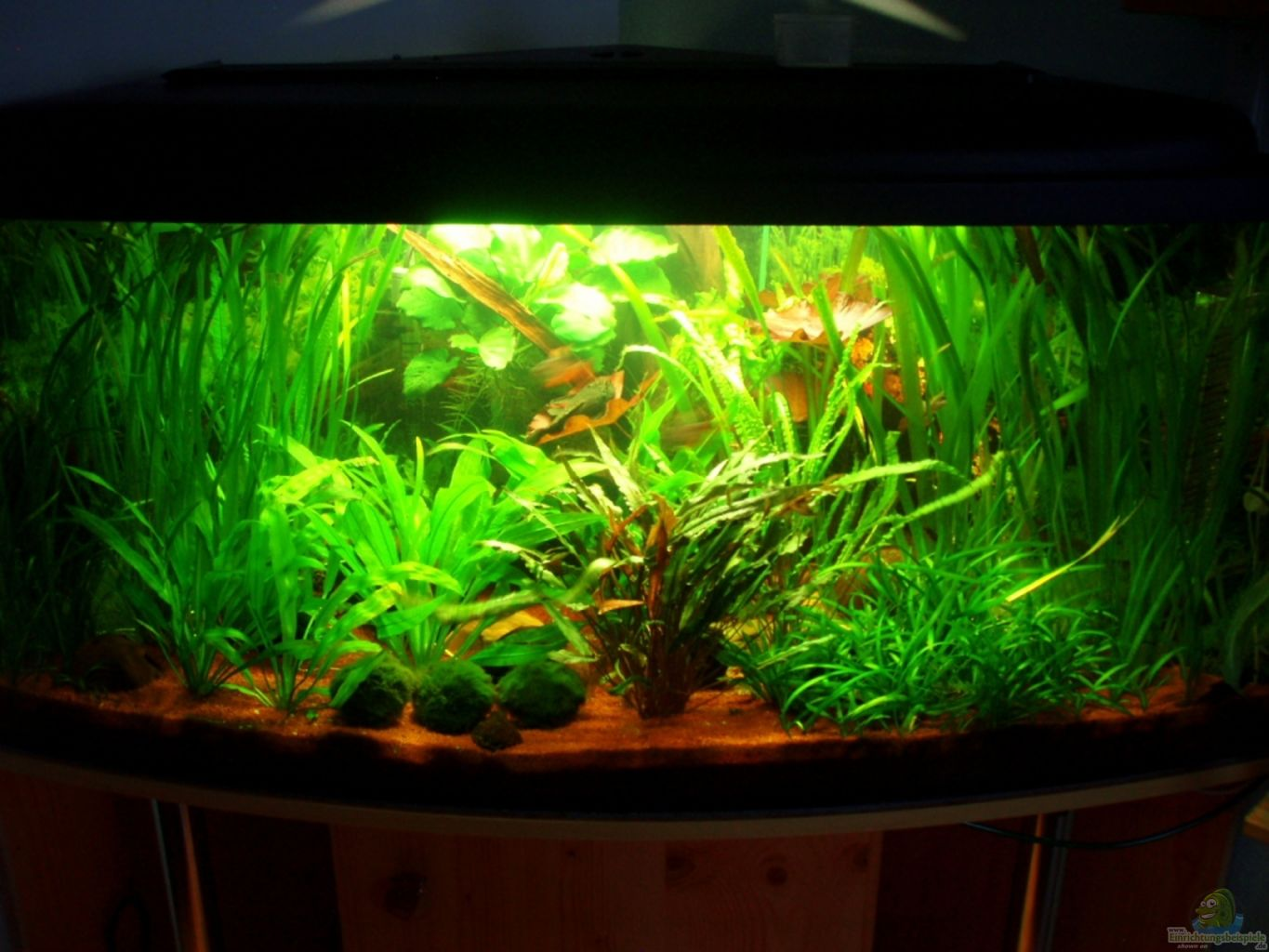 Aquarium von marco mein 1 eckbecken for Mein aquarium