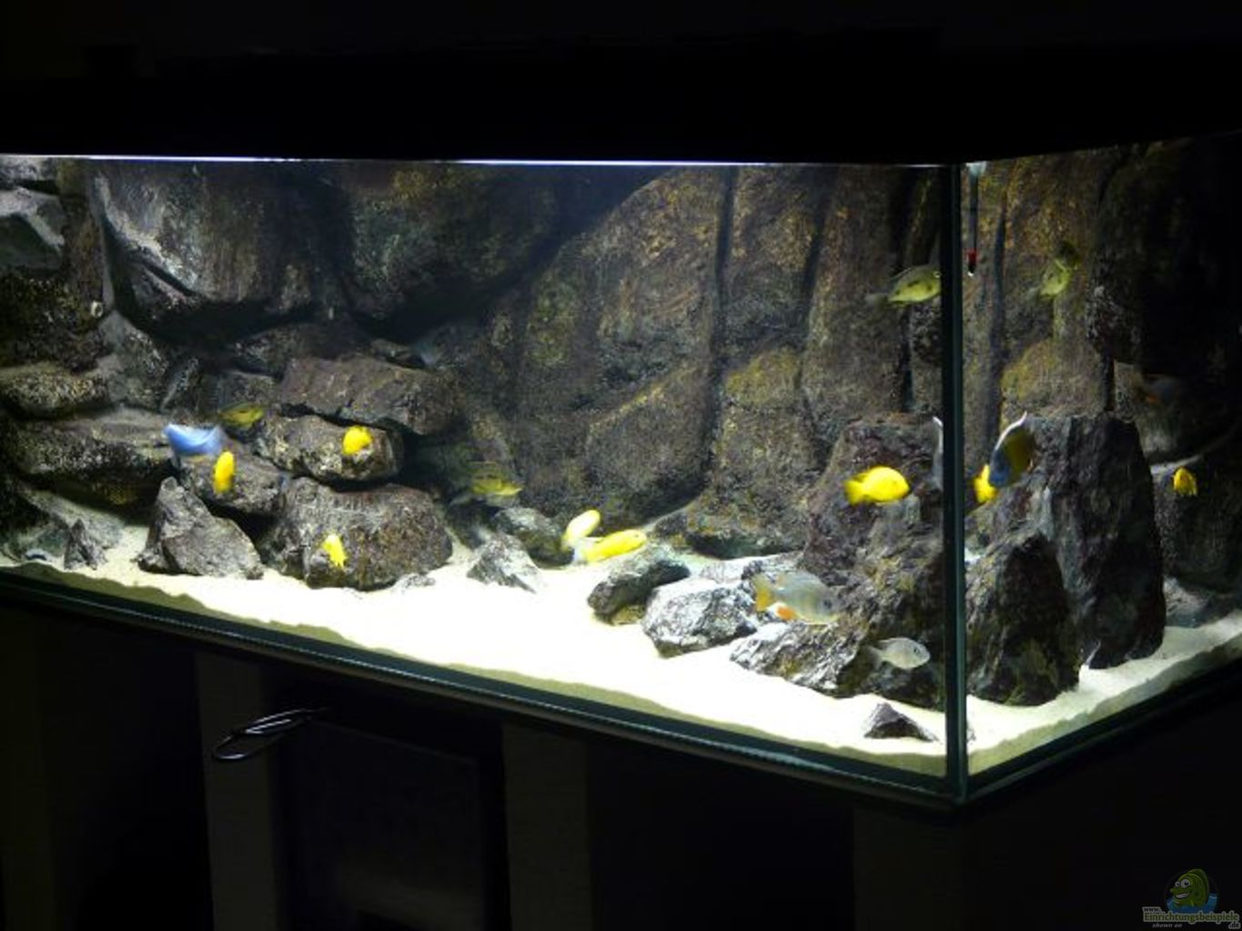 example no 12769 from the category lake malawi - Aquarium Wohnzimmer