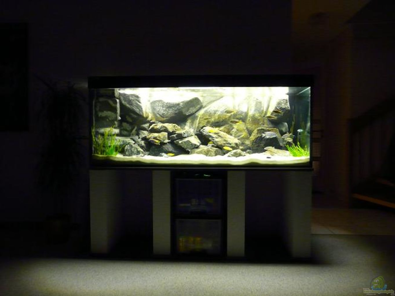 Example no 12769 from the category lake malawi - Aquarium wohnzimmer ...