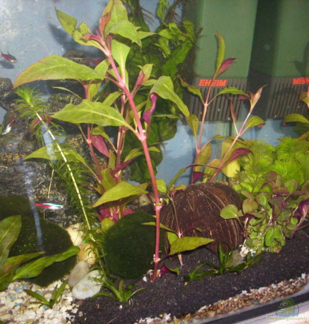 pflanzen im aquarium becken 12813 aus becken 12813 von. Black Bedroom Furniture Sets. Home Design Ideas
