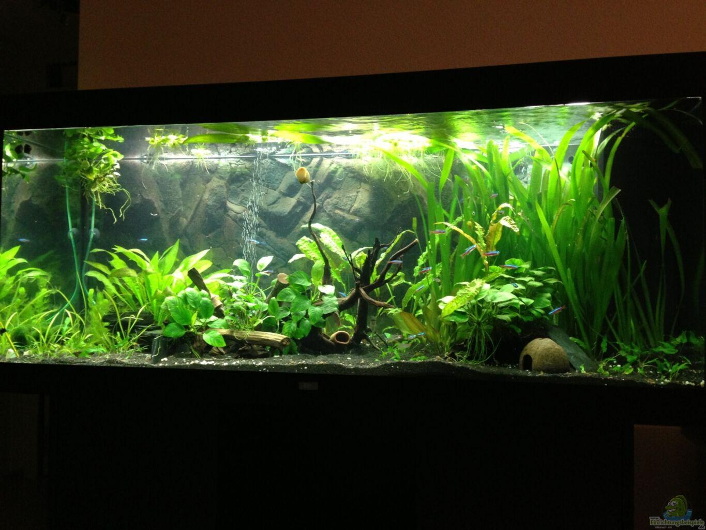 aquarium von smapo juwel rio 400. Black Bedroom Furniture Sets. Home Design Ideas