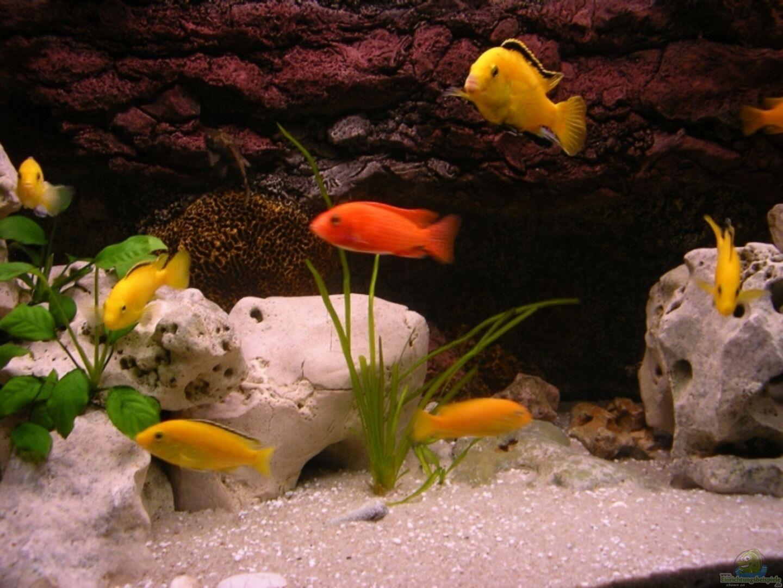 aquarium von magunga rock 12883 red brown reef. Black Bedroom Furniture Sets. Home Design Ideas