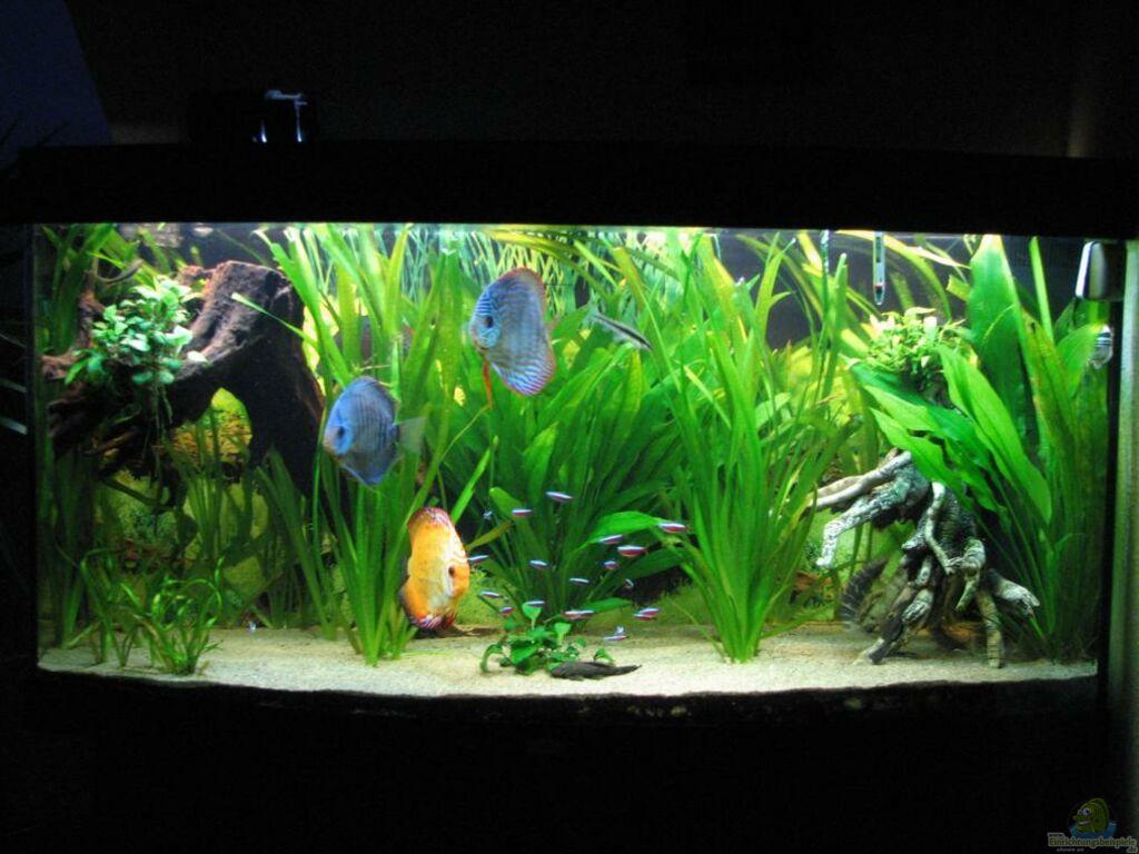 aquarium von stefan diskus becken aufgel st. Black Bedroom Furniture Sets. Home Design Ideas