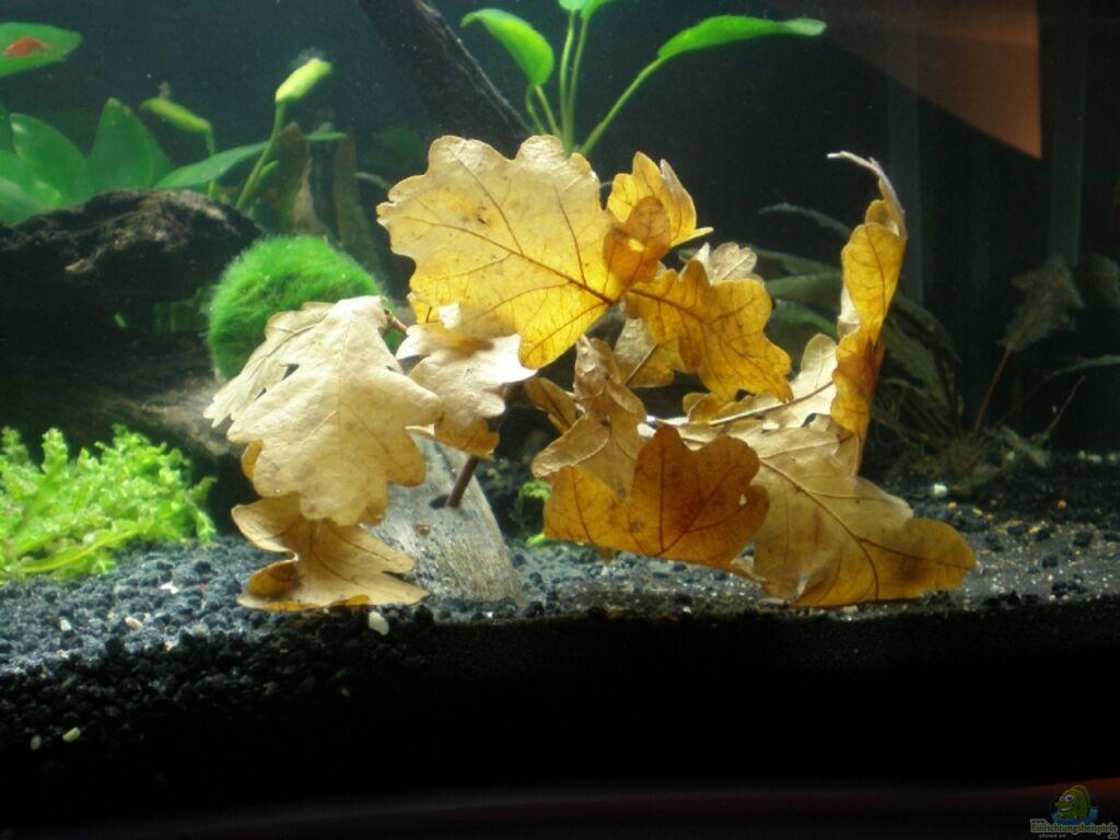 Einrichtungsbeispiele mit savannenholz for Boden aquarium