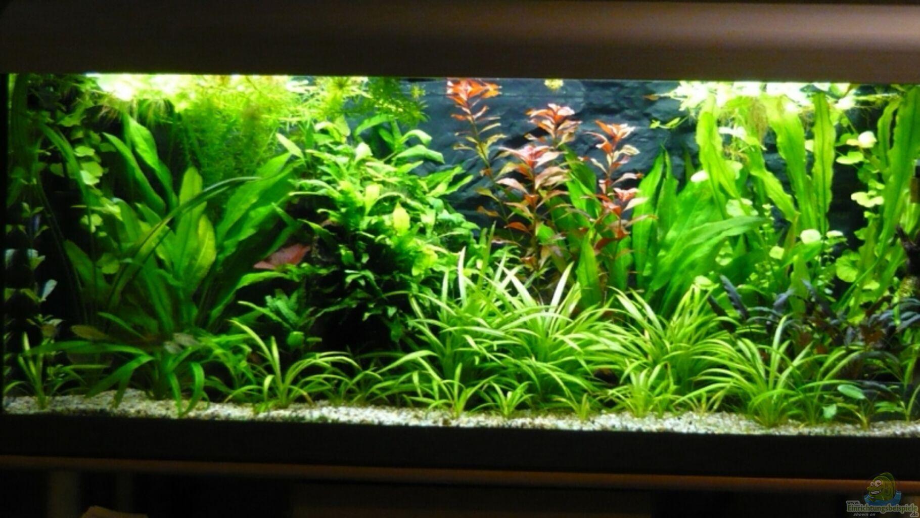 aquarium von wels 240 liter. Black Bedroom Furniture Sets. Home Design Ideas