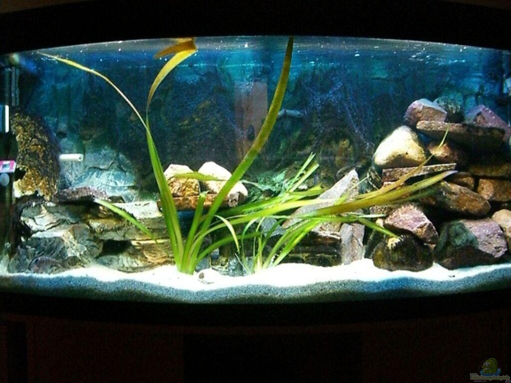 aquarium von bootboy malawi 260. Black Bedroom Furniture Sets. Home Design Ideas