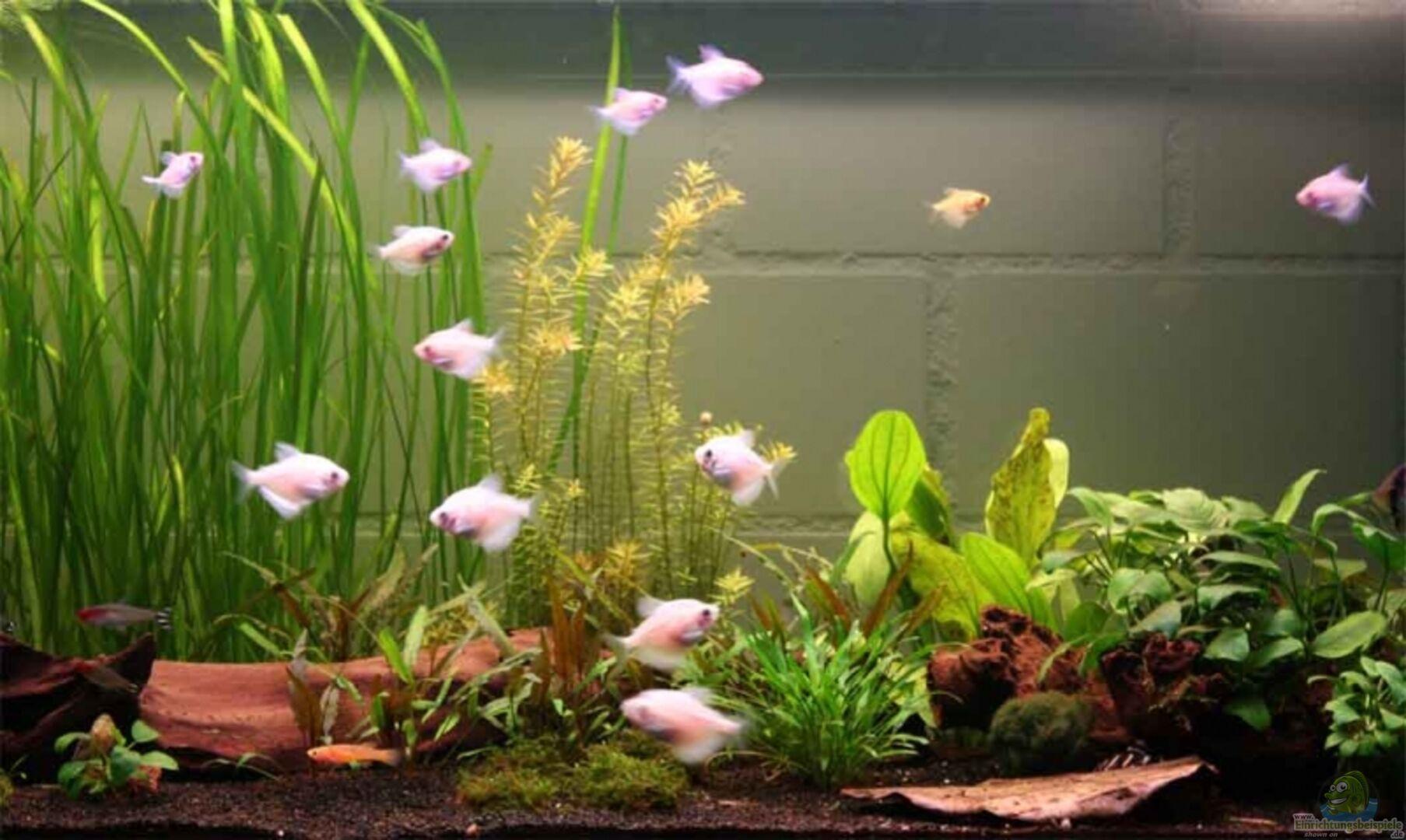 aquarium von lewino becken 13197. Black Bedroom Furniture Sets. Home Design Ideas