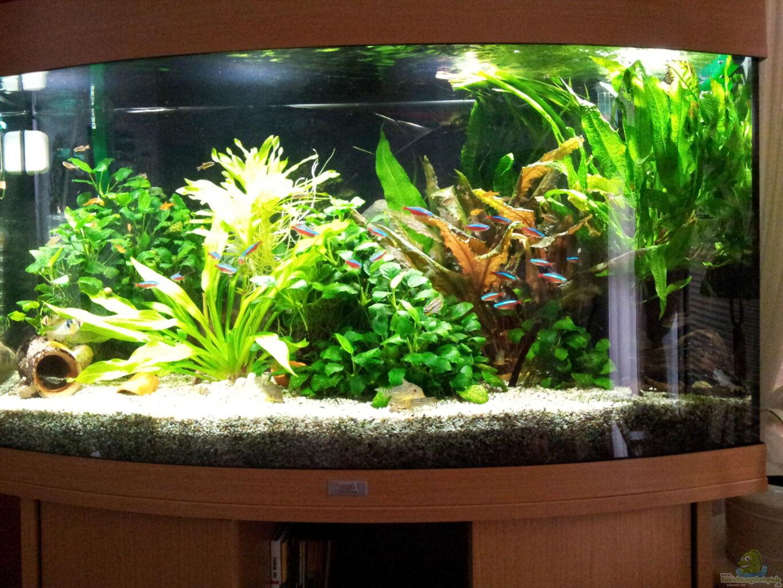 aquarium von erschreckerb r juwel vision 180. Black Bedroom Furniture Sets. Home Design Ideas