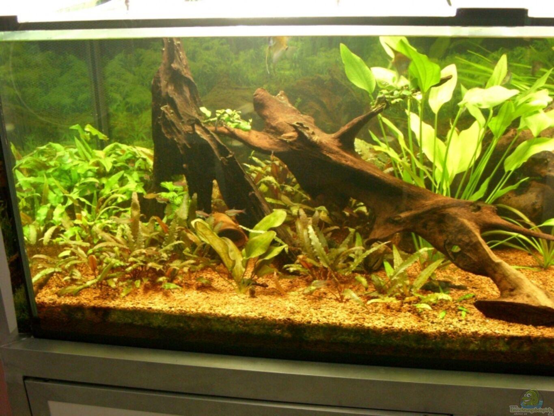Oliver boden becken 13211 nur noch als beispiel for Boden aquarium
