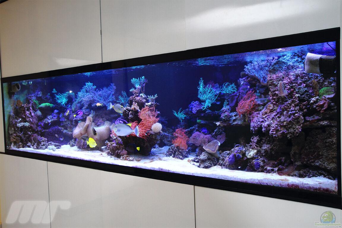 aquarium von marco r misch becken 13239. Black Bedroom Furniture Sets. Home Design Ideas