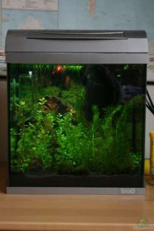 aquarium von malawi perlh hnchen existiert nicht mehr. Black Bedroom Furniture Sets. Home Design Ideas