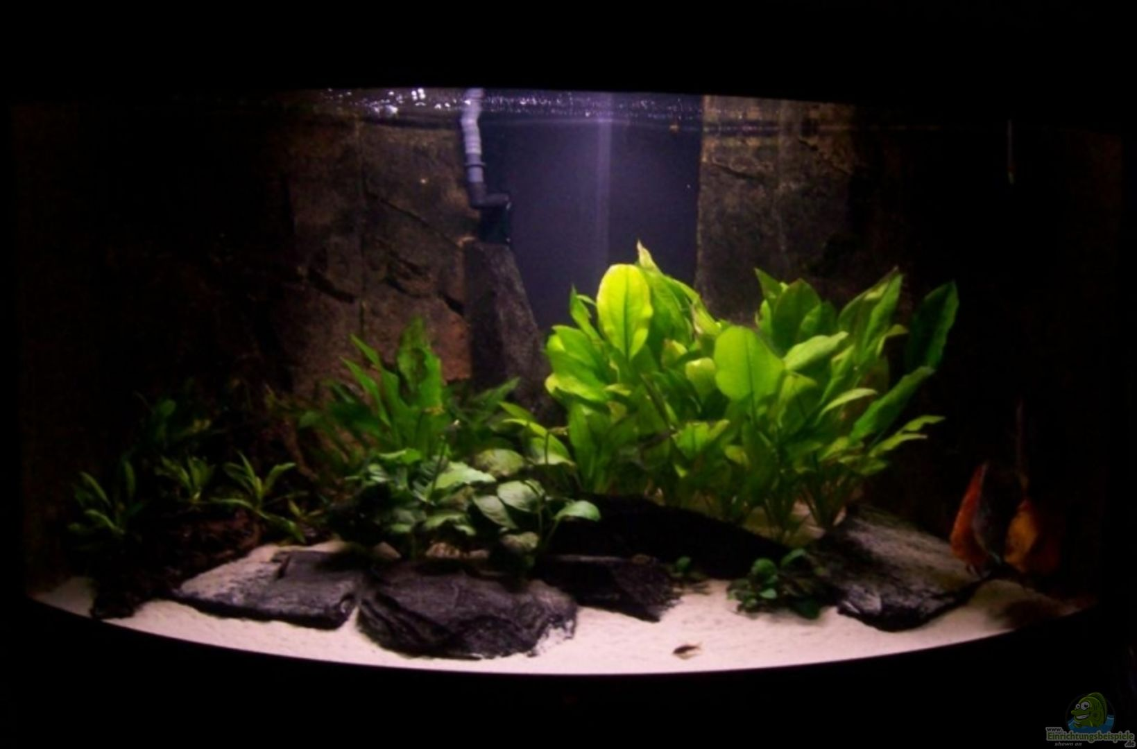 aquarium von alamo becken 13269. Black Bedroom Furniture Sets. Home Design Ideas