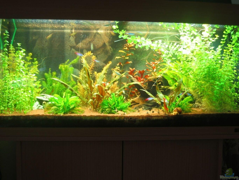 aquarium von schred becken 13309 aufgel st. Black Bedroom Furniture Sets. Home Design Ideas