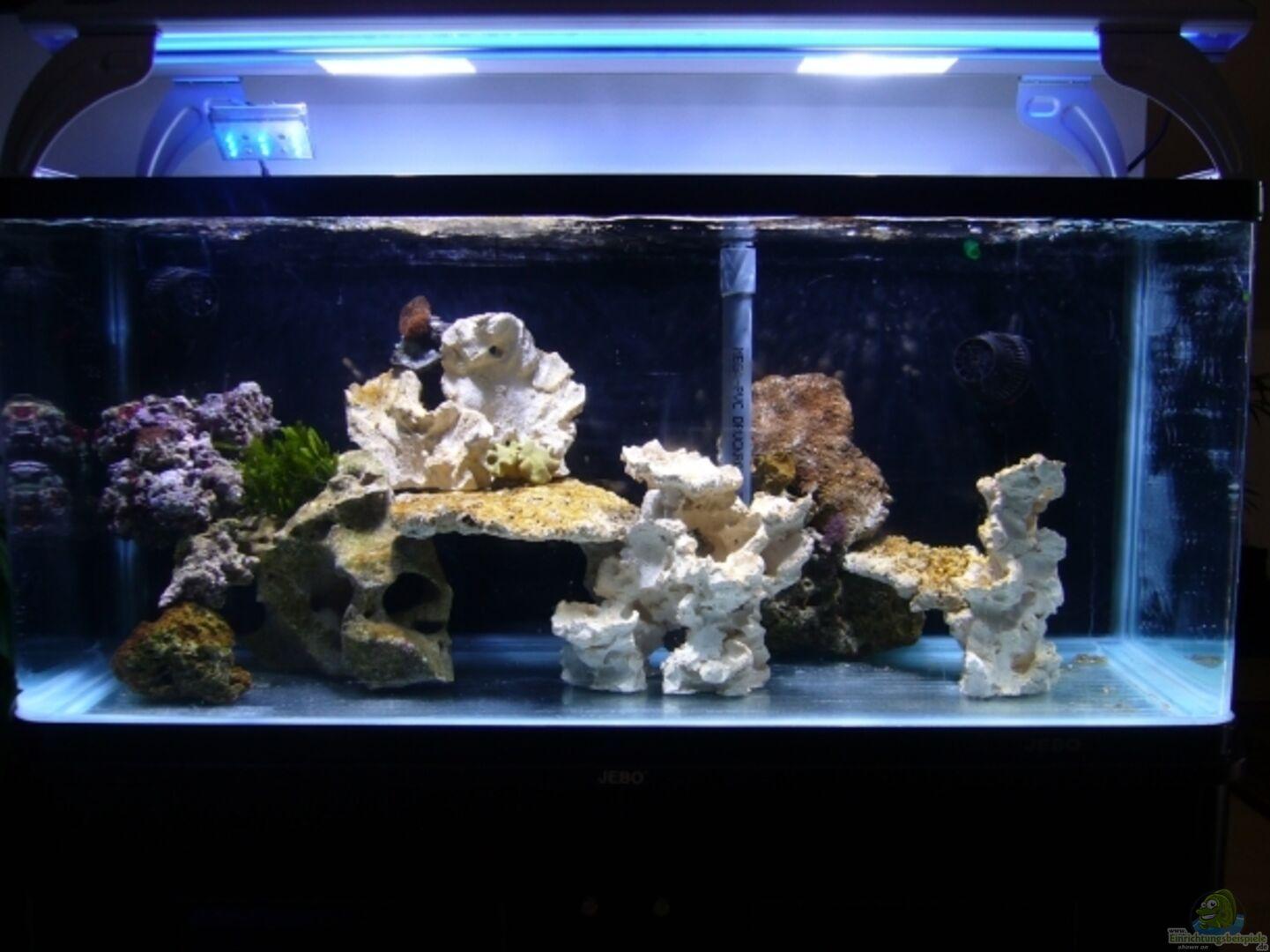 aquarium von kadijah becken 13332. Black Bedroom Furniture Sets. Home Design Ideas