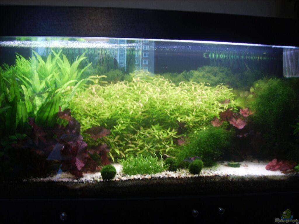 aquarium von stefan bischoff mein traumbecken. Black Bedroom Furniture Sets. Home Design Ideas