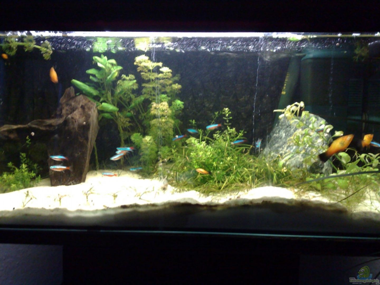 Aquarium Hauptansicht von Schlafzimmer aus Schlafzimmer von Welslau