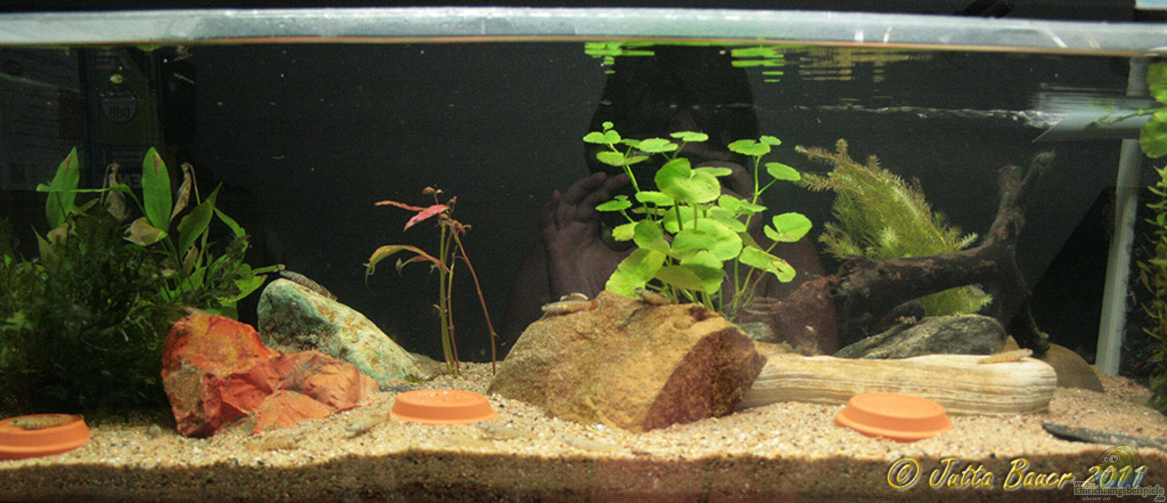 aquarium von ferrika rhinogobius zhoui. Black Bedroom Furniture Sets. Home Design Ideas