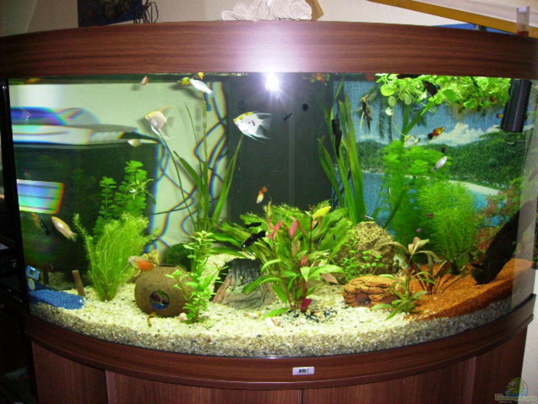 aquarium von redzac w 13482 trigon 350. Black Bedroom Furniture Sets. Home Design Ideas