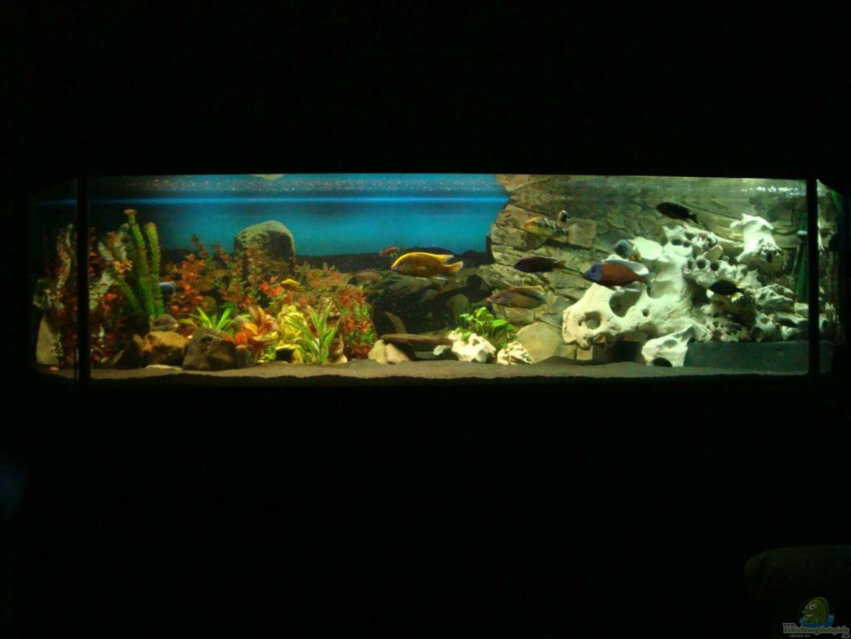 Aquarium von fabian s becken 13495 for Aquarium becken