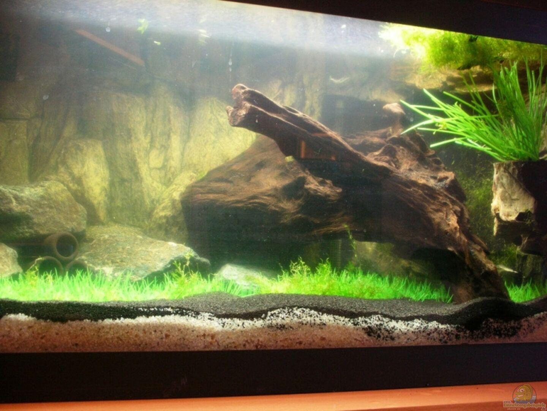 aquarium von dasy s neelybecken becken 13496. Black Bedroom Furniture Sets. Home Design Ideas