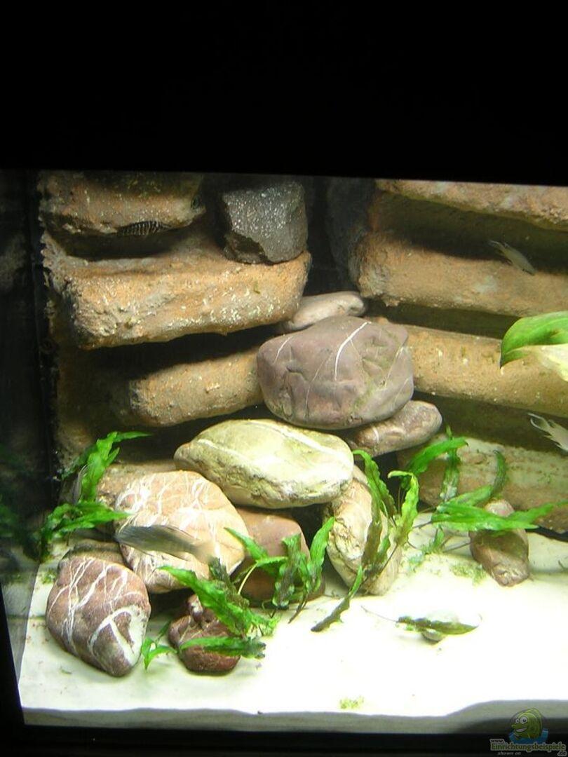 Aquarium von markus m becken 13510 for Kieselsteine baumarkt