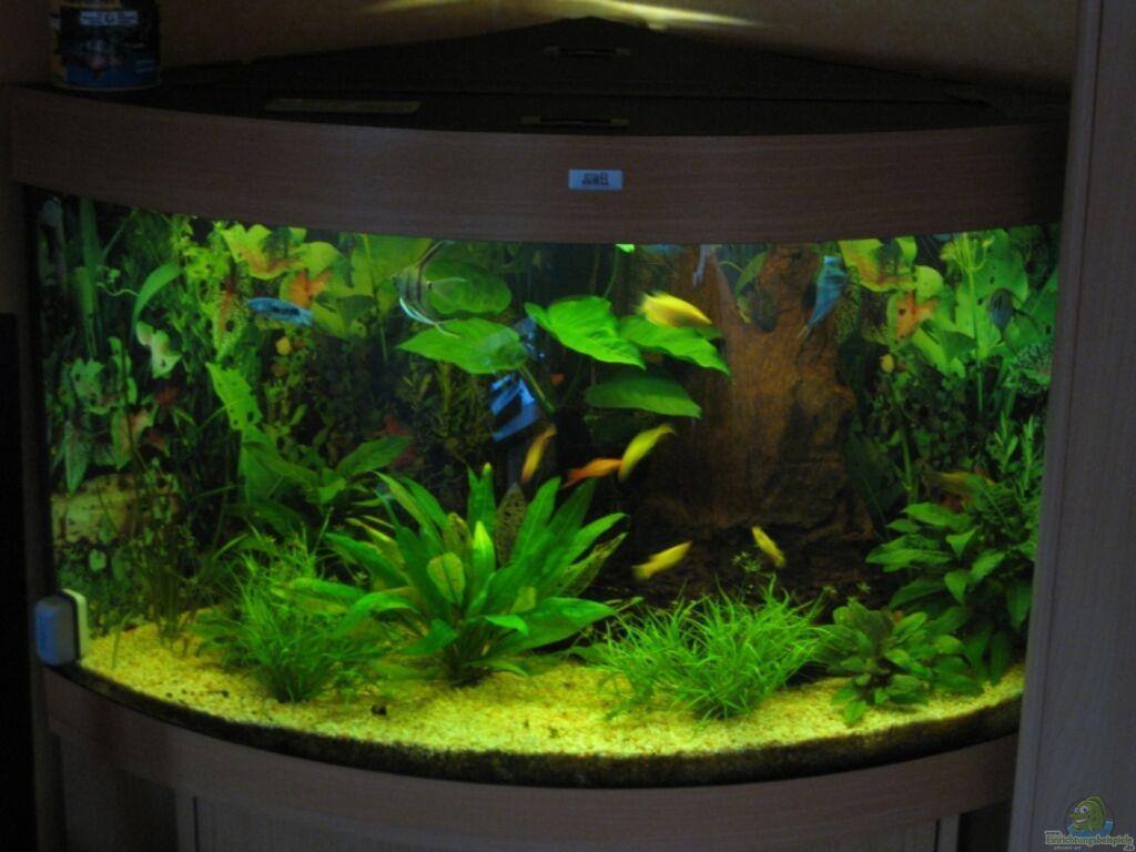 Aquarium von chaossepsy trigon 190 for Aquarium einrichtungsideen