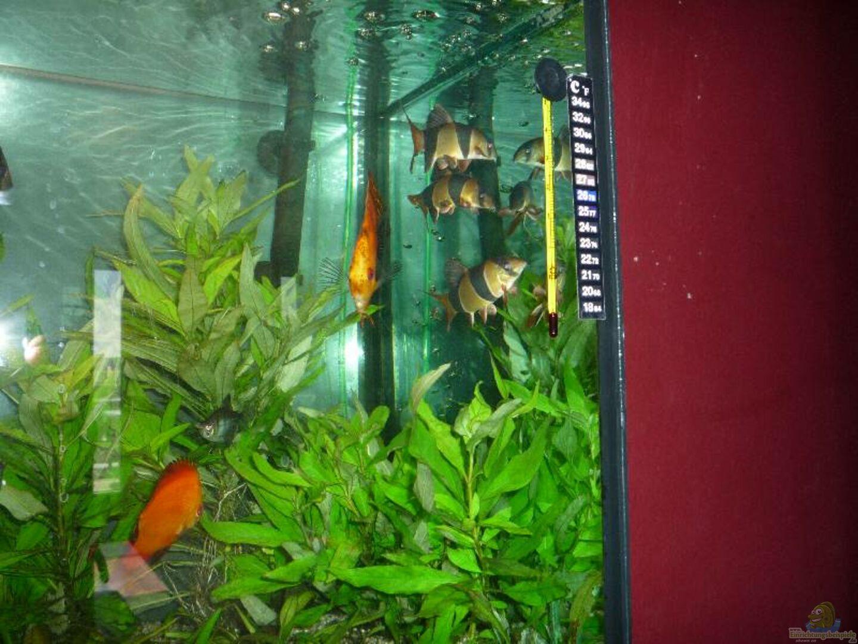 Aquarium von michi 82 13554 diskus for Diskus aquarium