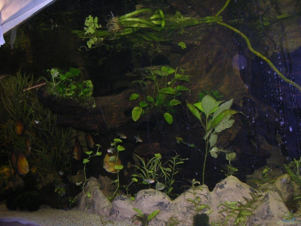 aquarium von dornwels becken 13562. Black Bedroom Furniture Sets. Home Design Ideas