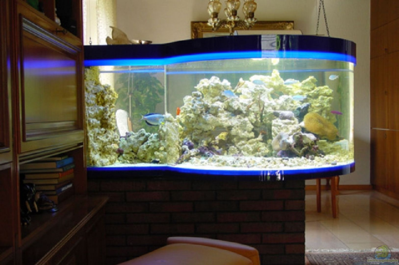 aquarium von holger rauhe becken 13613. Black Bedroom Furniture Sets. Home Design Ideas
