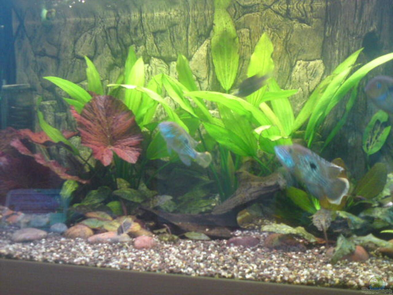 aquarium von michael blum becken 13725. Black Bedroom Furniture Sets. Home Design Ideas