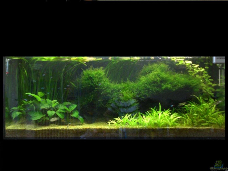 aquarium von basstard 13730 diskus. Black Bedroom Furniture Sets. Home Design Ideas