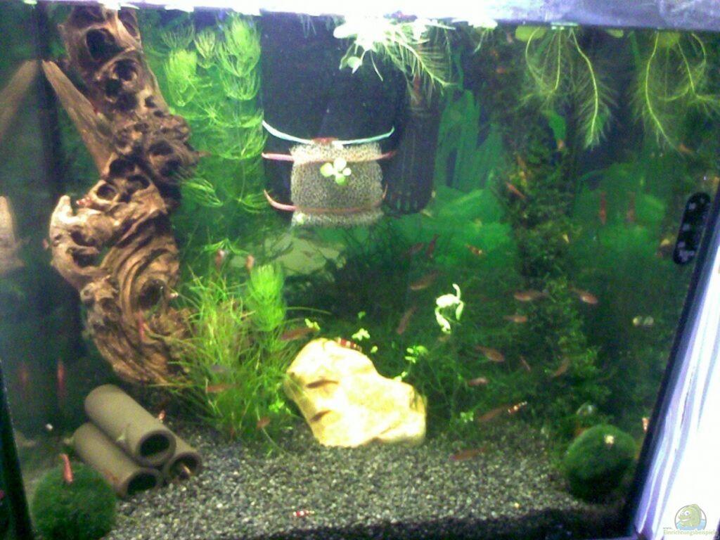 aquarium von basstard garnelen. Black Bedroom Furniture Sets. Home Design Ideas