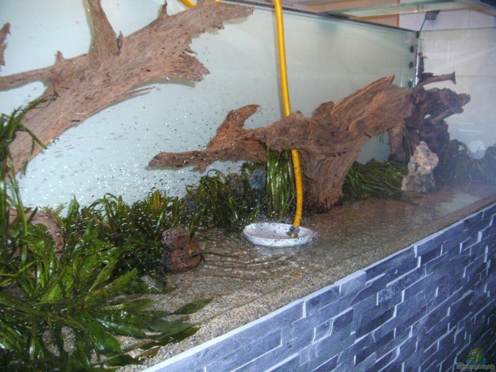 aquarium von phoenix81 becken 13765. Black Bedroom Furniture Sets. Home Design Ideas